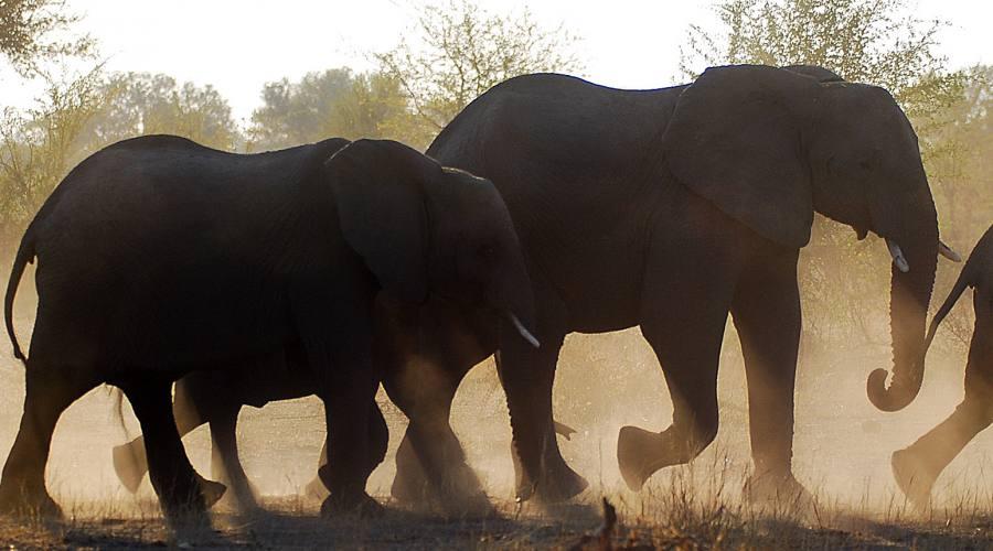 elefanti nel parco Etosha