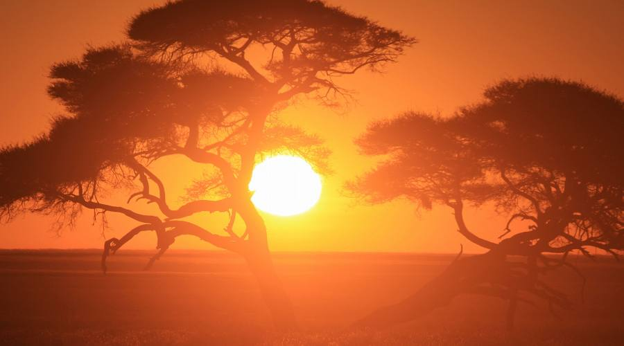 alba in Etosha