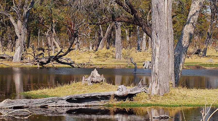 paesaggio nel parco Kruger