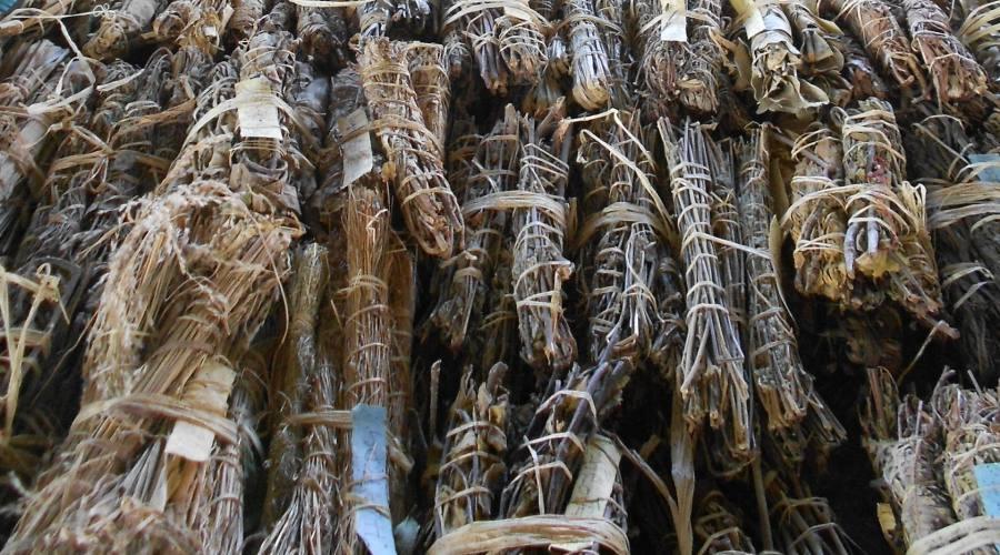 Vaniglia del Madagascar