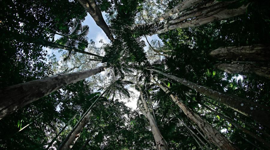 Cairns: la foresta pluviale