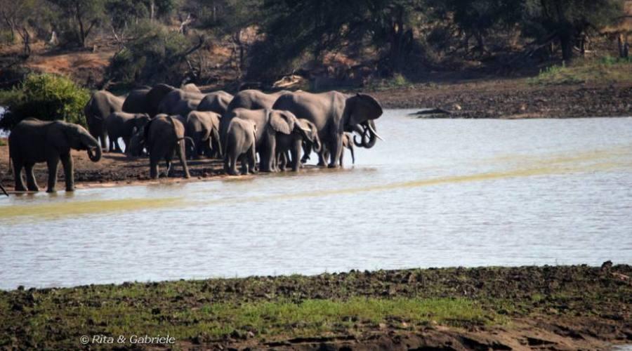 Elefanti al Kruger