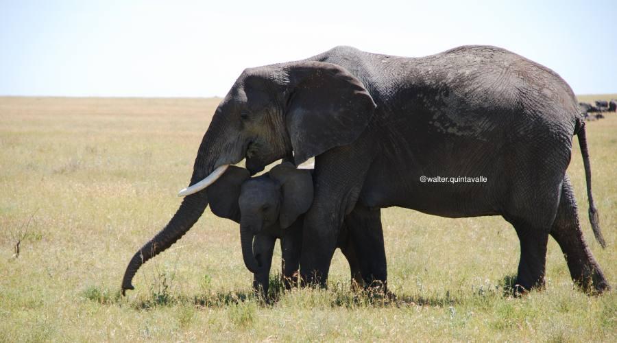 Elefantessa con cucciolo