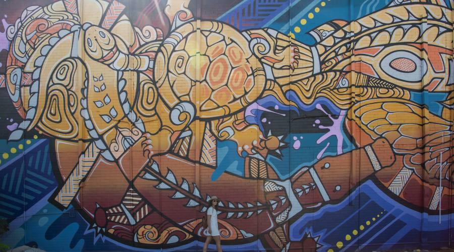 Darwin, street art