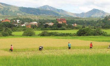 Cultura e Tradizioni di un'Isola Continente