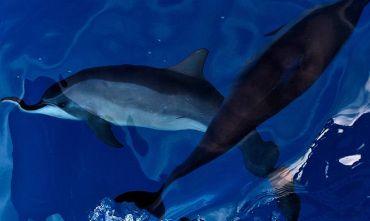 Brasile in libertà: L'arcipelago più bello del mondo fra delfini e coralli!