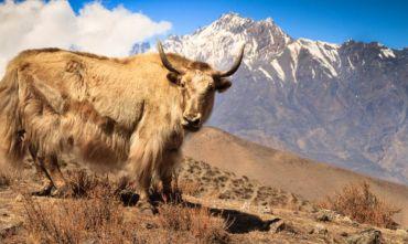 Trekking nel Regno del Mustang