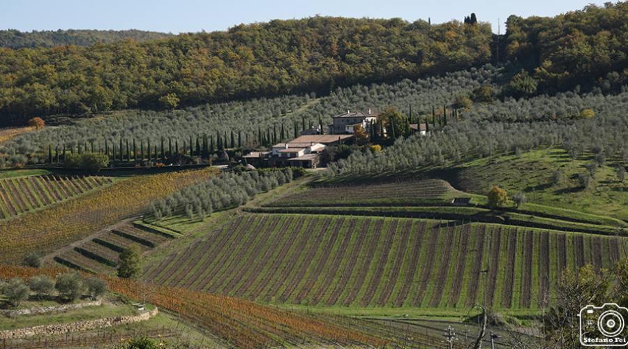 panorama della zona del Chianti Gallo Nero