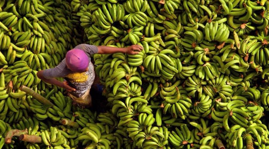 Banane Santo Domingo