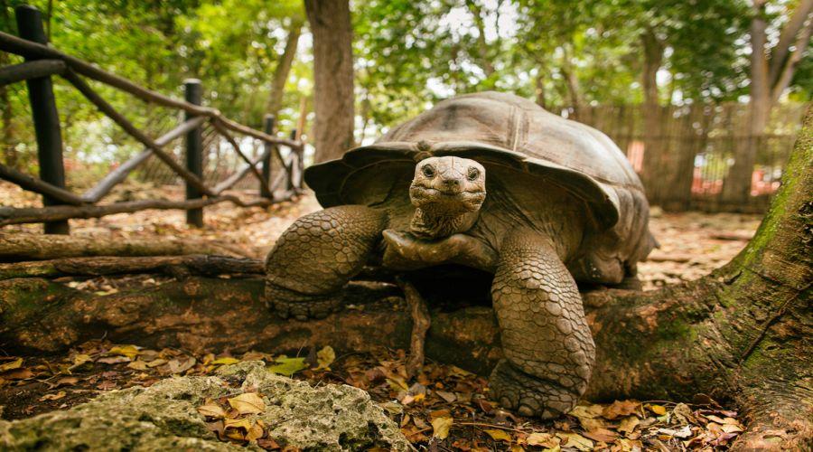 la tartaruga dell'isola