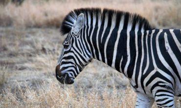 Nazione arcobaleno - Safari in gruppo e l'incanto di Mauritius