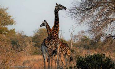 Nazione arcobaleno - Safari in gruppo