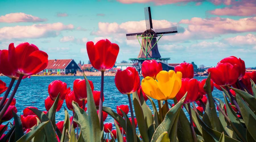 Tulipani e mulini...l'Olanda