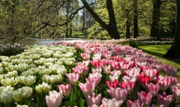 Indimenticabile crociera di 9 giorni con tour nel paese dei tulipani