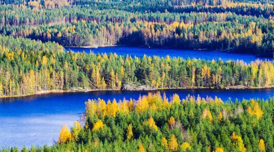Foreste ricche di colori