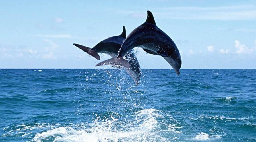 Delfini avvistati nel mare di Pisciotta