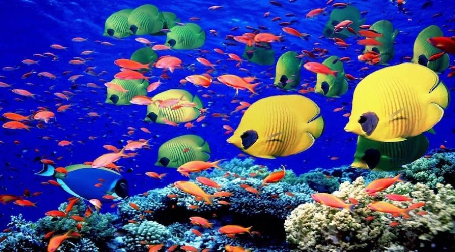 Pesci in Mare