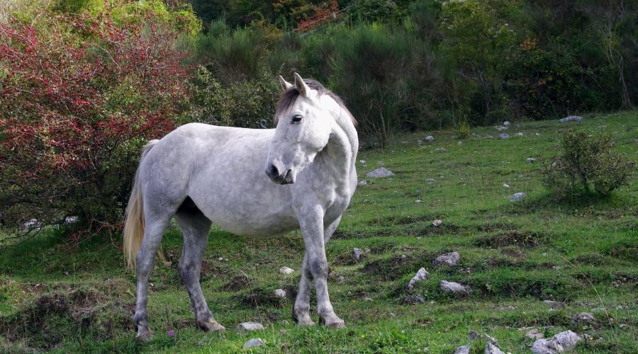 Parco Nazionale d'Abruzzo...