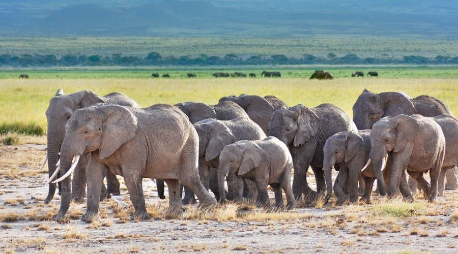 elefanti all'Amboseli National Park