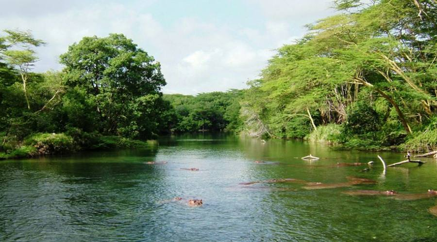ippopotami sul fiume