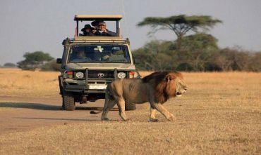 Safari Grand Amboseli 5 giorni/4 notti con estensione mare 3 notti