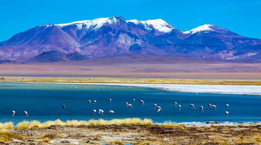 Fenicotteri nella Laguna Colorada