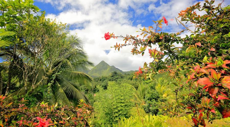 Il paesaggio tropicale di Martinica