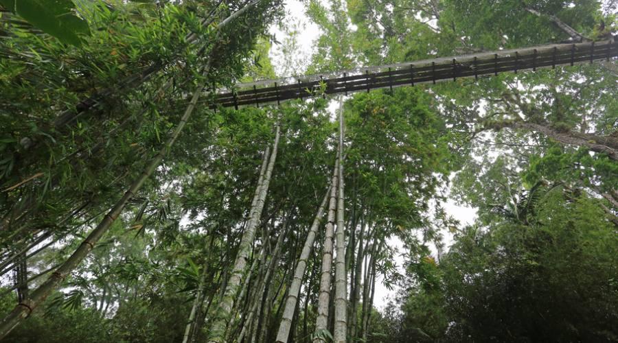I ponti sospesi del Jardin de Balata