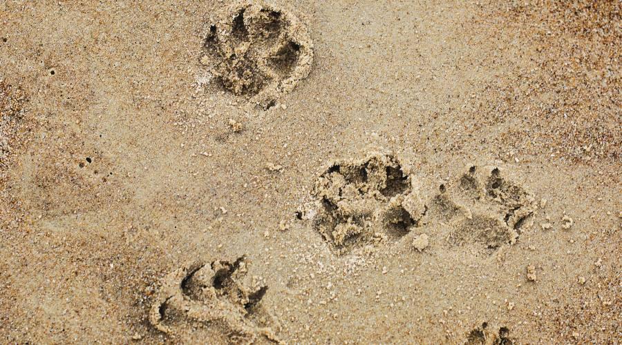 Una passeggiata in spiaggia...