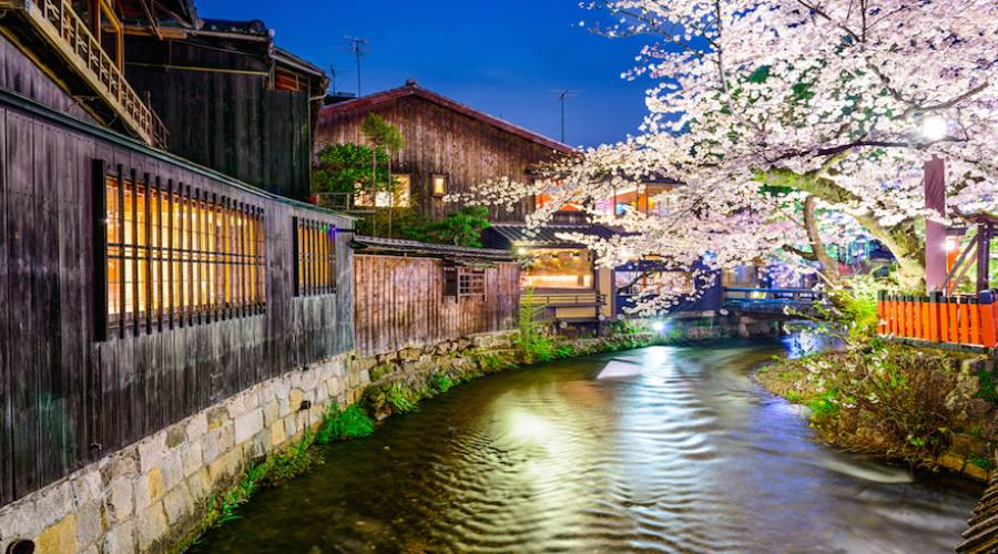 Kyoto - Fioritura dei ciliegi