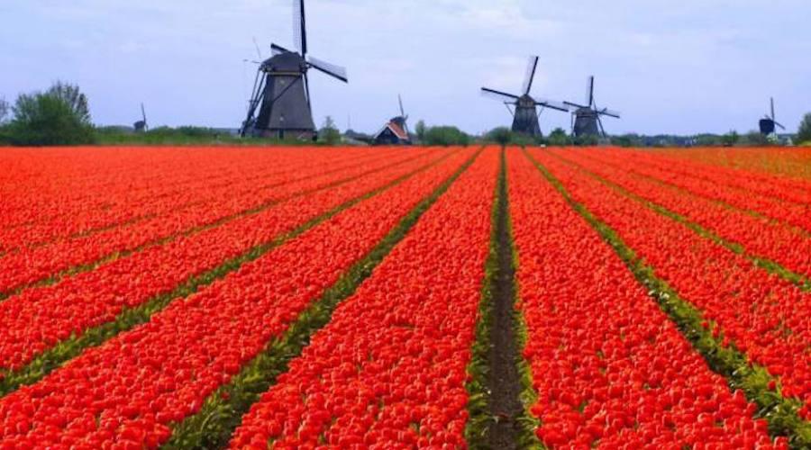 Tulipani ad aprile