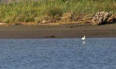 House Boat in Italia: Il Parco Naturale del delta del Po, 1 settimana, andata e ritorno