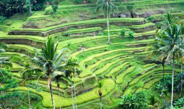 Bali - Lombok - Gili Trawangan