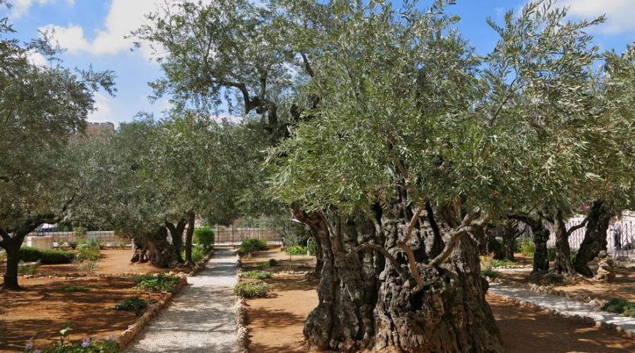 Gerusalemme l'Orto degli ulivi