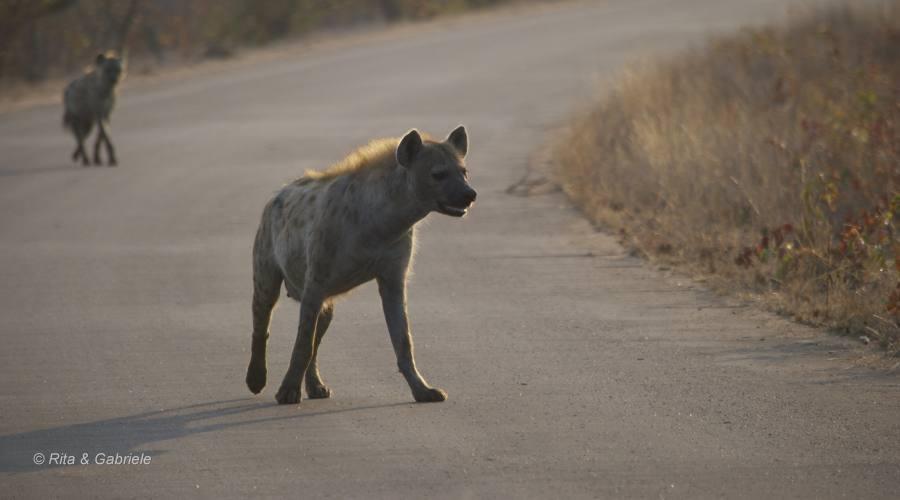 Iene al Kruger