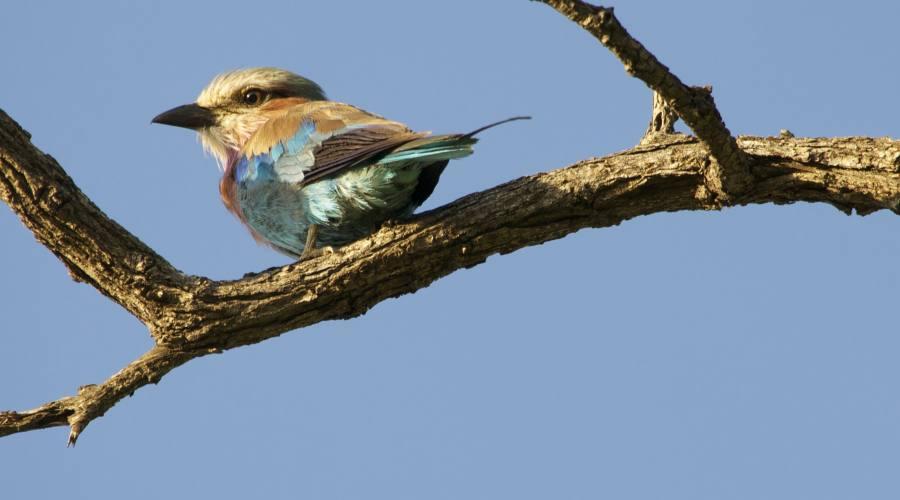 Uccello tipico