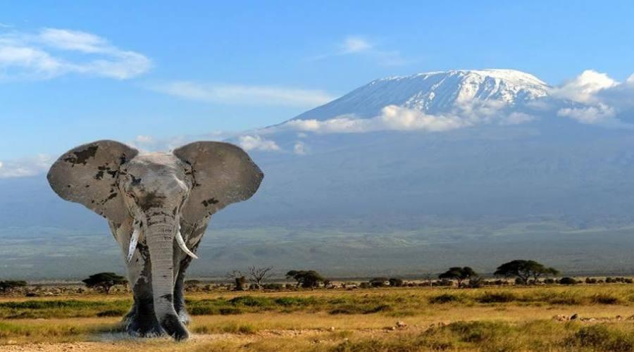 elefante al parco amboseli