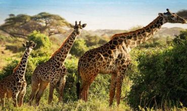 Safari Amboseli 4 giorni/3 notti con estensione mare sulla costa