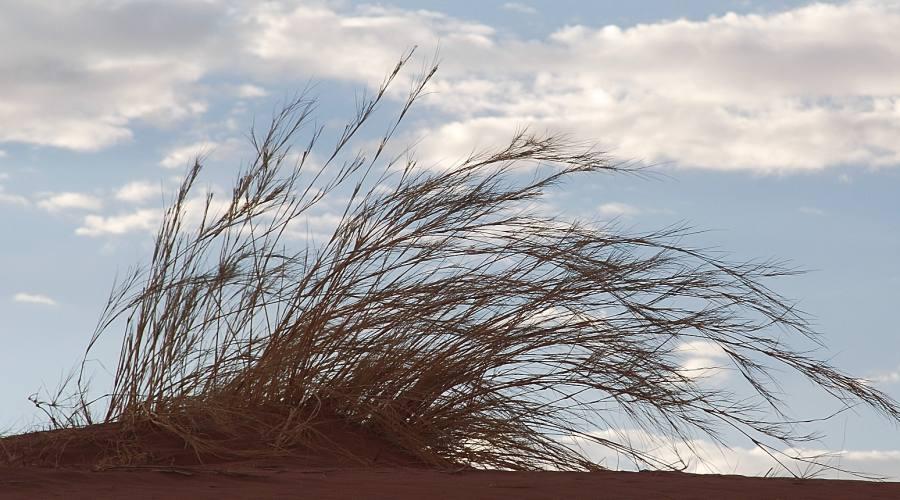 deserto del Namib