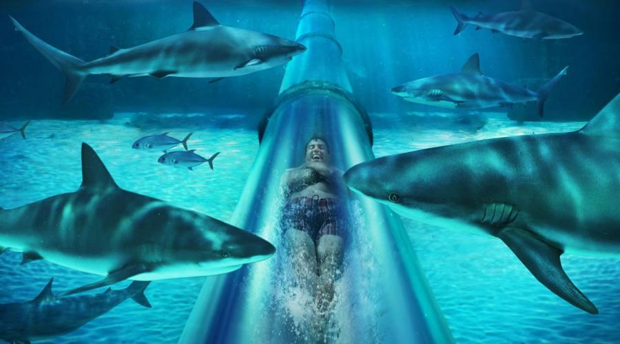 Marine Habitat Shark Lagoon