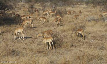 Safari Full Immersion e Cape Town