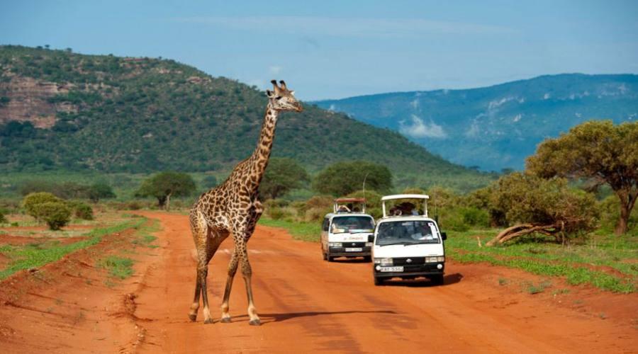 avvistamento giraffa