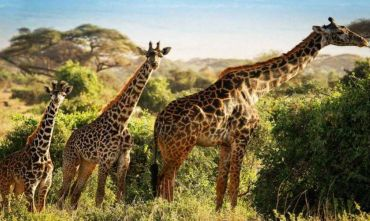 Gran Safari Discovery Kenya 6 notti safari