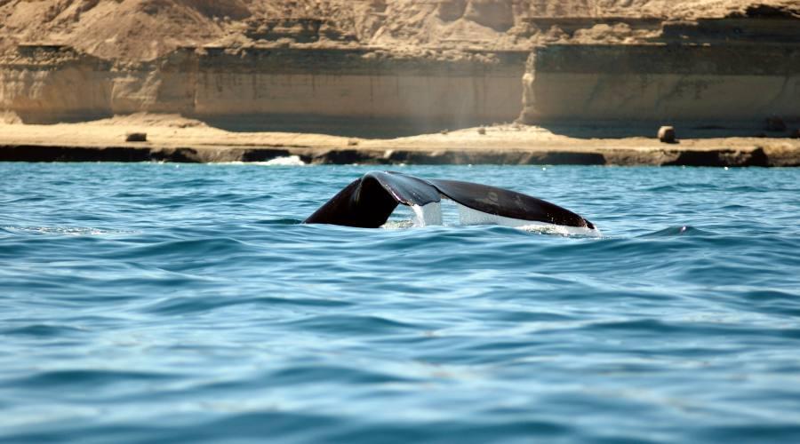 Inseguendo la balena. Penisola di Valdes