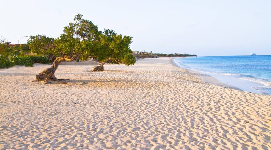 Eagle Beach e il divi-divi di Aruba