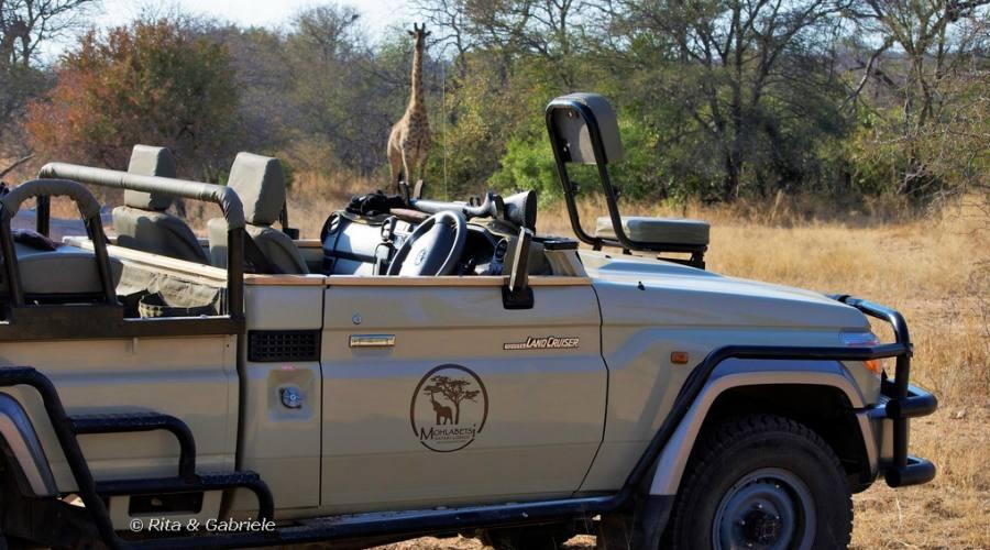 Safari al Mohlabetsi