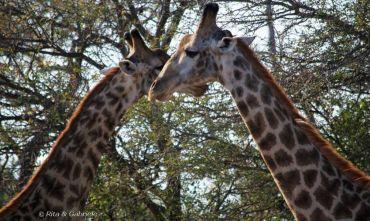 Safari e natura in riserva privata