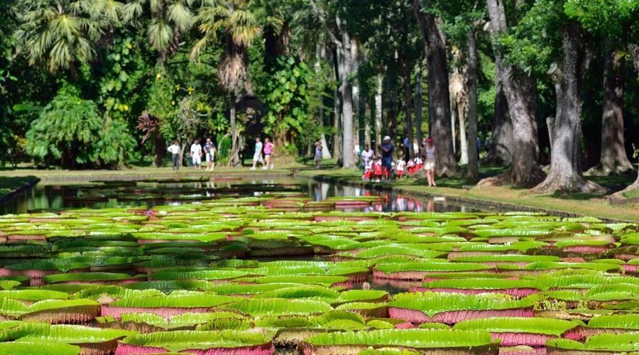 I giardini di Pamplemousses