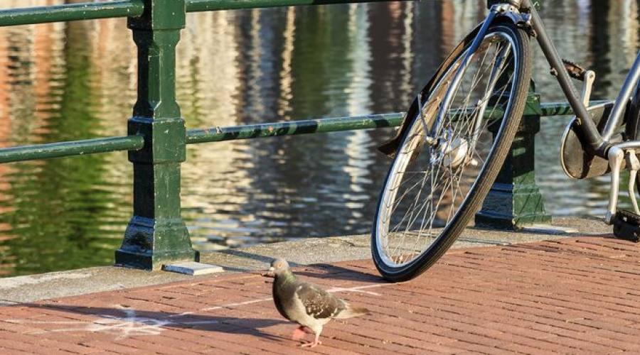 Sul ponte ad Amsterdam