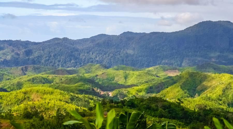 Le foreste del Madagascar